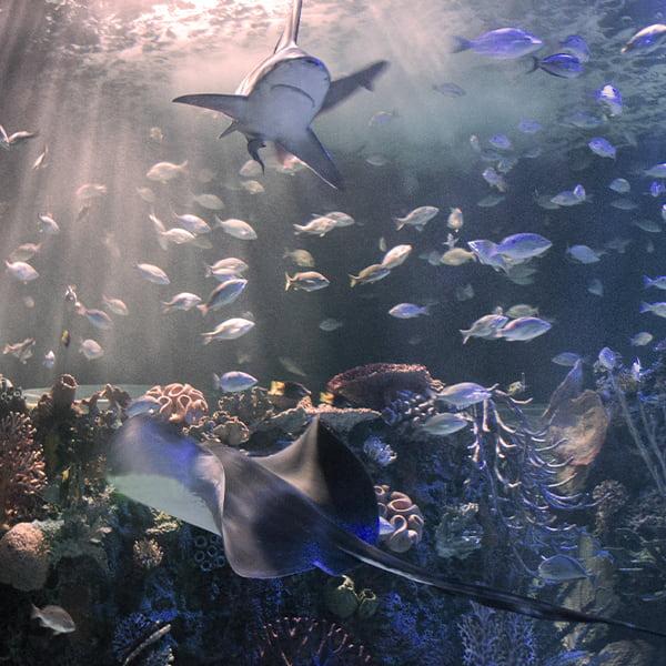 nuestras-exhib-oceanarioD